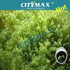 Seaweed Extraction Ascophyllum Nodosum
