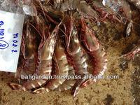 tiger prawn for tiger prawn whole sale