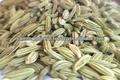 semi di finocchio elenco fornitori in india