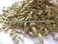 puro indiano esportatori lista di semi di finocchio