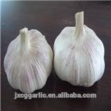 Natural garlic exporter
