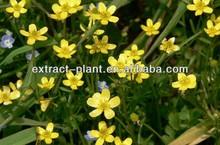 Cats claw Extract /Ranunculus ternatus thunb powder