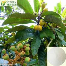 Natural Loquat Leaf Extract 10:1