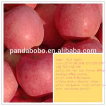china fresh fuji apple organic fuji apple on hot sale