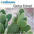 Cactus P.E
