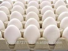 Quality Chicken Eggs