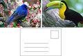 de alta resolución de aves animales 3d postal proveedor de guangzhou