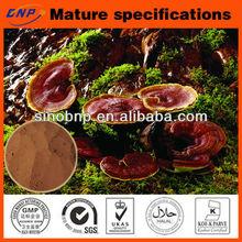 GMP Manufacture Supplies High Quality Reishi Mushroom P.E Polysaccharide &Triterpene---organic reishi mushroom extract powder