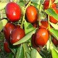 100% frutafresca planta las semillas de los tipos de bayas