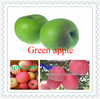Import from china sour sweet green apple fruit in high quality in low price