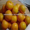 Best price fragrant juicy baby mandarin orange fruit in low price new crop fresh orange
