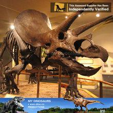 Animal fossil model dinosaurs skeleton foam replicas
