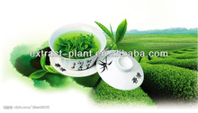chinese green tea powder/ green tea leaf extract 90% from China