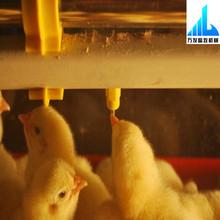water plastic poultry automatic chicken nipple drinker birds
