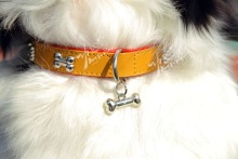 up-to-date styling colorful Kung Fu Dog brand pet dog collar with bone accessories fashionable pet lead dog leash