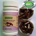 ganoderma lucidum spore polvo cápsula mejor la salud ecológica de la diabetes suplemento de alimentos