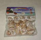 Nature sea shells