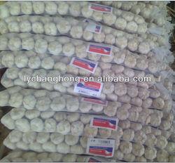 [Hot Sale] braid garlic for sale