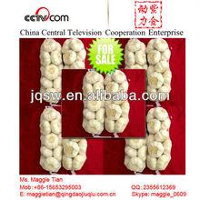 2014 New Crop Top Quality Low Price Fresh Red Garlic(4.5-6.0cm)
