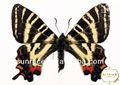 farfalla orecchini forma inviti di nozze