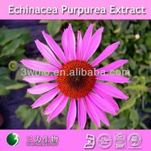 flower extract 4:1 10:1 echinacea purpurea extract