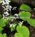 Venta de planta natural de extracto de epimedium sagittatum 95% icariina extracto/epimedium sagittatum semillas