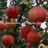 Big Size Shaanxi Fresh Pomegranate Fruit