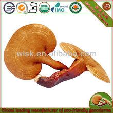 orignic growing reishi mushrooms