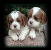 Plush Puppy Toy /Soft Stuffed Puppy Toy /Cute Puppy Dog Toys