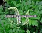 Cimicifuga romose Nutt.-Manufacture-Free sample-Bulk powder-Supply COA-2.5%HPLC-Black Cohosh Extract