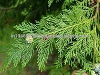 Amazing Uses for Cedar Wood/Cedarwood Pure Essential Oil