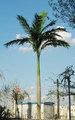 Buona qualità albero di cocco artificiale, albero falso