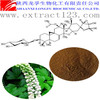 Triterpene Glycosides Extract Powder Black Cohosh Root P.E