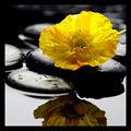 de la pared 3d amarillo hermosas flores decortive foto sobre lienzo
