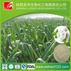 Manufacture Supply Natural Garlic Extract Allicin Powder