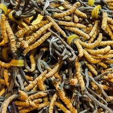 Chinese Cordyceps Extract;Cordyceps Sinensis Extract,