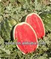 rodada sem sementes crimson melancia sementes exportador de