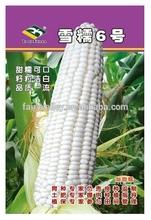 Blanco ceroso dulce de maíz glutinoso semillas semillas de maíz para el cultivo de super dulce sabroso- la nieve no ceroso. 6