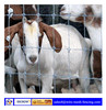 red top field fence( OEM&ODM )/ Grassland Fence manufactory/vinyl horse fence