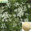 Factory supply 100% natural common cnidium fruit extract osthole