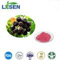 Super natural de antioxidantes choke berry extracto/choke berry en polvo de la fruta