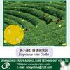 Pheromone trap for tea pest control