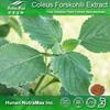 100% Natural Coleus Forskohlii Extract 10:1, Coleus Forskohlii Powder Extract