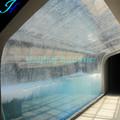 haijing 90 acrílico de grado el túnel del acuario
