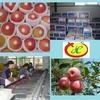 2014 new season royal gala apple fruit vender