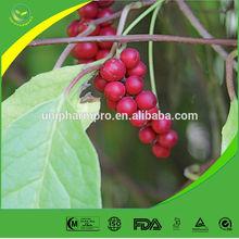Manufacturer offer natural Schisandra/Schisandra Berry/Schisandra Berry Extract