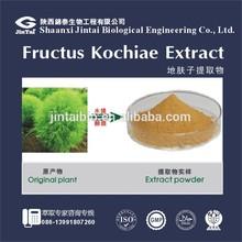 di fu zi powder 10:1natural broom cypress fruit extract