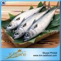 Zhejiang frutosdomar japonês congelado cavala peixe number#kmw4027 monte