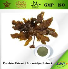 Sells top high quality and natural Fucoidan Extract Brown Algae Extract kelp extract fucoidan