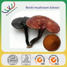 Chinese herb medicine 100% pure reishi mushroom extract